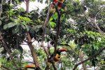 toucans-2